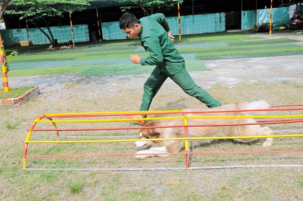 Huấn luyện chó chuyên nghiệp tại TPHCM, Đồng Nai, Bình Dương