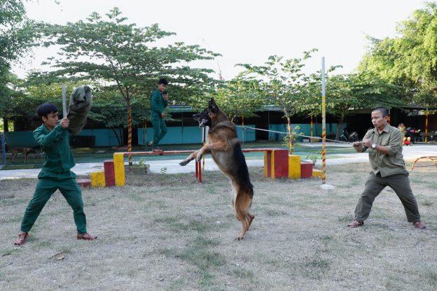 Những giống chó nghiệp vụ được lựa chọn nhiều nhất